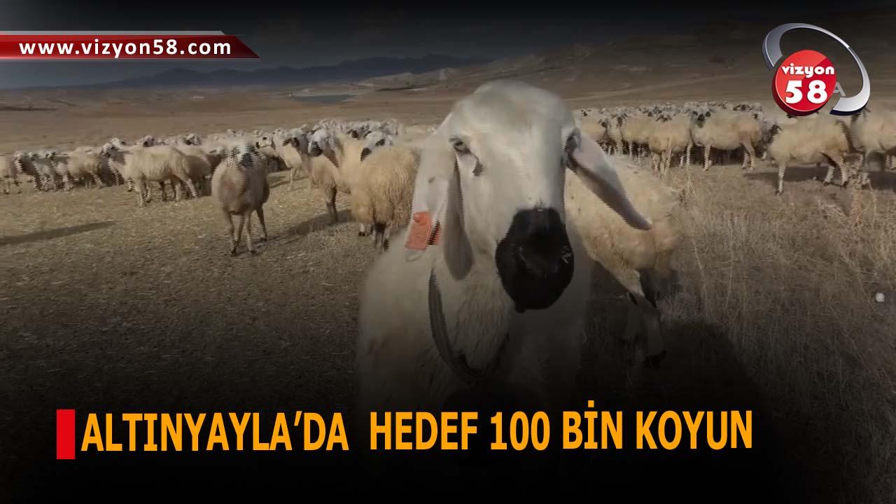 ALTINYAYLA'DA  HEDEF 100 BİN KOYUN