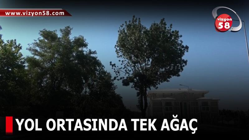 YOL ORTASINDA TEK AĞAÇ